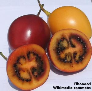 Tamarillos fruits yellow red tree tomato