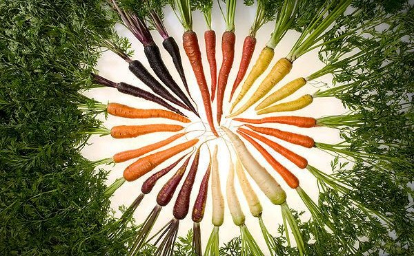 Carrots of the rainbow, Photo: ARS, Stephen Ausmus